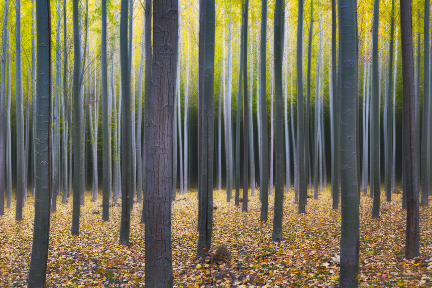 a surreal photograph of trees taken at a tree farm in oregon