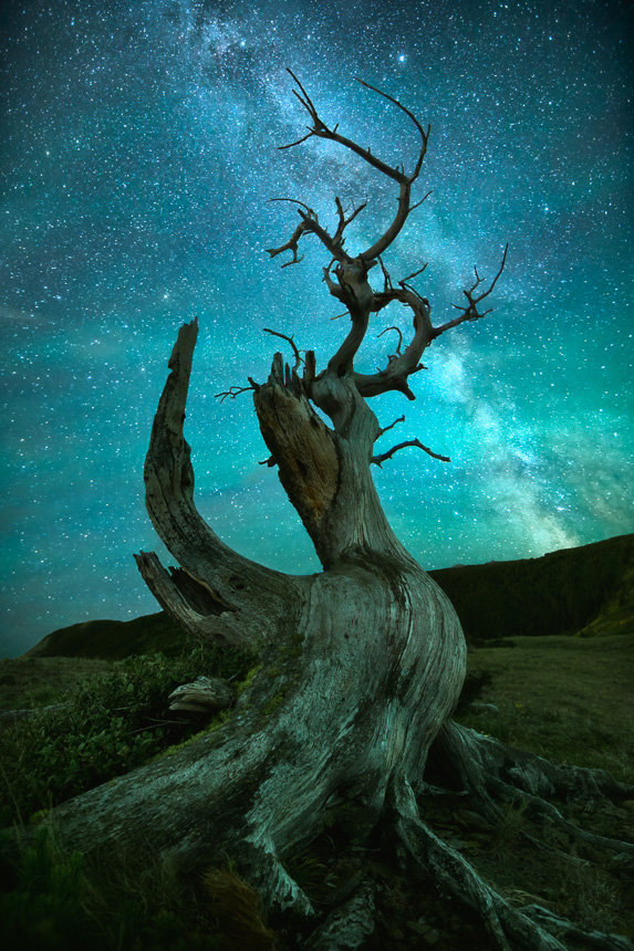 A night sky photo featuring the milky way galaxy and an ancient dead tree.