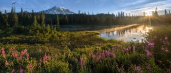 <h5>Morning at Rainier</h5><p>Mount Rainier National Park, Washington</p>